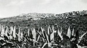 Agrigento e agavi