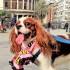 Mondo cane: come parlano Iddu e Idda