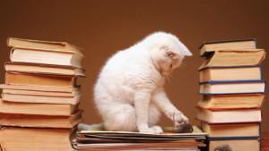 gatto_tra_i_libri-620x350
