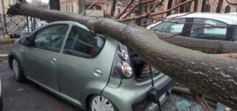 Le cifre del disastro a Cinque Stelle in tutta Italia