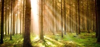 Giornata internazionale delle foreste: l'importanza degli alberi