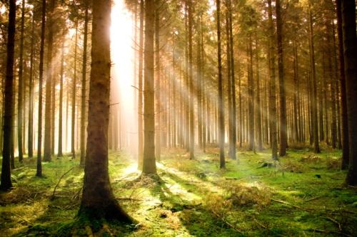 Foresta-sostenibile
