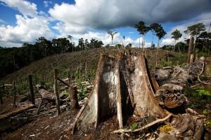 allarme_deforestazione