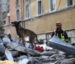 Cani salvano vite nel terremoto tweet di Mauro