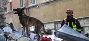 Figli, Cani, Amore, Bellezza e Terremoto