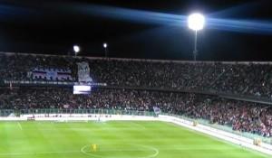 Molti soggetti affetti da Zamparinite frequentano lo stadio Barbera nonostante gli alti rischi di contagio tra la folla.