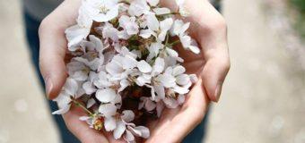 Giornata Mondiale della Gentilezza, oggi quanto mai necessaria