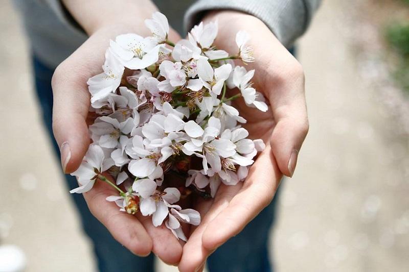 Gentilezza fiori M