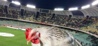 Serie B, giornata 23 con clamoroso risultato a Bari. Le pagelle per club e protagonisti