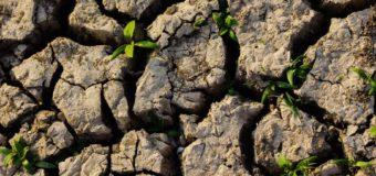 L'arte di adattarsi ai cambiamenti: vademecum per potenziare la resilienza