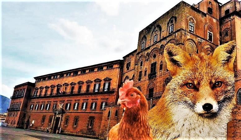 Volpi e polli regione siciliana 2 T