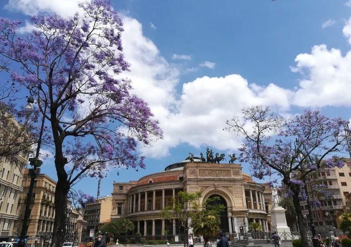 Cicale al centro di Palermo